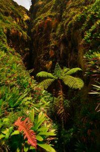 La Grande Faille -  Volcan La Soufrière - Parc national de la Guadeloupe Basse-Terre / Guadeloupe