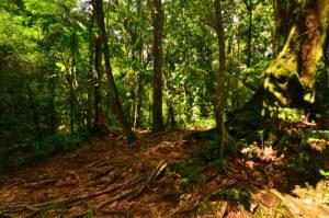 Le Saut des 3 Cornes à Sofaïa -  Parc national de la Guadeloupe -  Basse-Terre / Guadeloupe