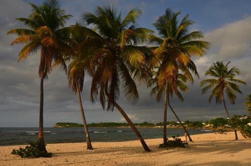 Le Morne Larcher<br> Parc Naturel Régional de La Martinique