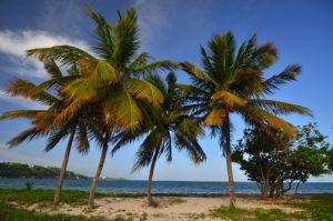 La Plage de la Pointe de la Saline -  Grande-Terre / Guadeloupe