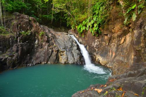 Forêt primitive Sentier entre Anse Couleuvre et Grande Rivière Île de la Martinique