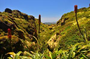 Vue du sommet de La Découverte (1467m) de La Soufrière -  Parc national de la Guadeloupe -  Basse-Terre / Guadeloupe