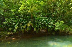 Rivière Lézarde à la Cascade du Saut de la Lézarde -  Basse-Terre / Guadeloupe