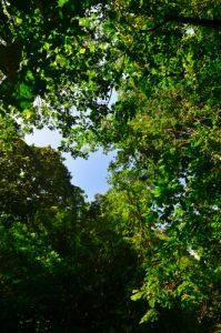 Canopée de la forêt tropicale -  La Cascade du Saut de la Lézarde -  Basse-Terre / Guadeloupe