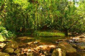 Rivière Corossol -  Parc national de la Guadeloupe -  Basse-Terre / Guadeloupe