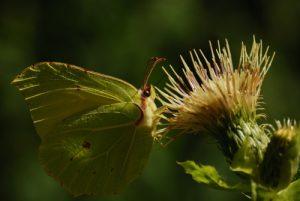 Papillon<br> Perte de l'Ain<br> Parc régional du haut Jura