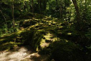 Tufière<br> Perte de l'Ain<br> Parc régional du haut Jura