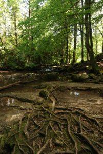 La rivière du Hérisson<br> Parc Naturel Régional du Haut-Jura