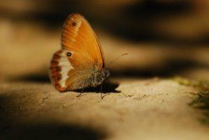 Papillon<br> La Cascade de la Queue de Cheval<br> Parc régional du haut Jura
