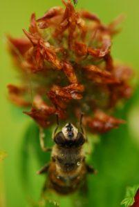 Insecte<br> Lac de Lamoura<br> Parc régional du haut Jura
