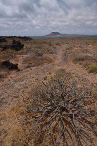 Vue sur l'île de Graciosa<br> Risco de Famara &amp; Salinas del Rio<br> Île de Lanzarote (Islas Canarias)