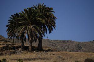 Vallée de Tabayesco. Île de Lanzarote (Islas Canarias).