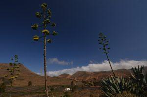 Valle de Malposo. Village d'Haria. Île de Lanzarote (Islas Canarias).