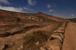 Valle del Rincon. Haria. Île de Lanzarote (Islas Canarias).