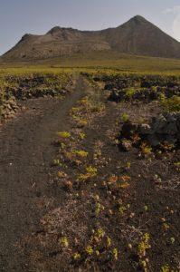 Le volcan La Corona. Île de Lanzarote (Islas Canarias).