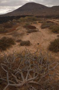 Salinas de los Agujeros. cfÎle de Lanzarote (Islas Canarias).