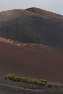 Echaderos de los Camellos. Monumento Natural de las Montanas del Fuego. Île de Lanzarote (Islas Canarias).