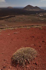 Volcan de scories rouges Montana Quemada. Parque Nacional de los Volcanes. Île de Lanzarote (Islas Canarias).