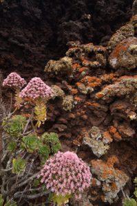 Intérieur du Cratère du volcan La Quemada à Maguez. Île de Lanzarote (Islas Canarias).