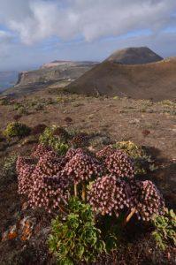 Le volcan La Corona, le volcan Los Helechos, l'île de Graciosa & la falaise Risco de Famara depuis depuis le volcan La Quemada. Île de Lanzarote (Islas Canarias).
