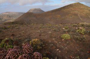Le volcan La Corona, le volcan Los Helechos & la falaise Risco de Famara depuis depuis le volcan La Quemada. Île de Lanzarote (Islas Canarias).