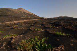 Culture vinicole dans des creux de scories volcaniques. La Géria. Île de Lanzarote (Islas Canarias).