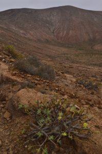Le volcan Caldera Blanca (1000m de diamètre, 460m).<br> Parque nacional de los volcanes.<br> Île de Lanzarote (Islas Canarias).