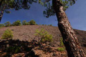Paysage volcanique dans les scories depuis la Montana Quemada.<br> Île de La Palma (Canarias)