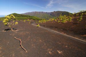 Paysage volcanique dans les scories entre la Montana Quemada et la Montana Enrique.<br> Île de La Palma (Canarias)