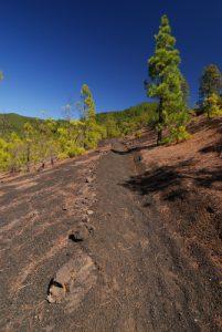 Paysage volcanique dans les scories entre le Volcan Bernardino la Montana Quemada.<br> Île de La Palma (Canarias)
