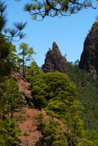 Vue sur la Cumbrecita en montant au Pico Bejenado<br> Île de La Palma (Canarias)