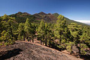 Vues de la route des volcans (Cumbre Vieja) depuis le Volcan Fuego. Île de La Palma (Canarias)