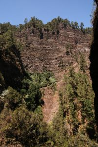 Forêt primaire des Lauriers sauvages Los Tilos Île de La Palma (Canarias)