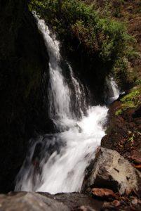 Cascade Fuente Caldera de Marcos dans la forêt primaire des Lauriers sauvages Los Tilos Île de La Palma (Canarias)