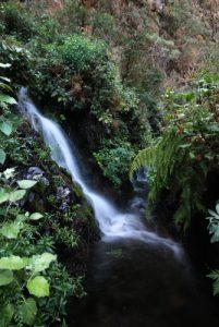 Cascade Fuente de Marcos dans la forêt primaire des Lauriers sauvages Los Tilos Île de La Palma (Canarias)