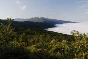 Cumbre nueva depuis la route des volcans (Cumbre Vieja). Île de La Palma (Canarias)
