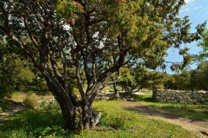 Le Fort de Buoux<br> Parc Naturel Régional du Lubéron