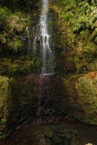Cascade le long de la Levada Caldeirao verde Île de Madère