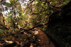 Levada Caldeirao verde Île de Madère
