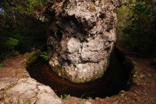 Libellule Orthemis (Orthemis macrostigma)<br> [Caractéristique : Expension sur S8] Anse Noire sur la Trace des Caps<br> Île de la Martinique