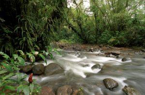 La Rivière du Lorrain<br> La Trace des Jésuites<br> Parc Naturel Régional de La Martinique