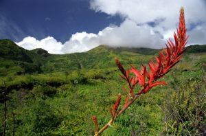Sentier des sources chaudes de la Montagne Pelée Île de la Martinique