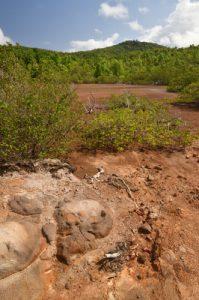 Mangrove de la Prequ'île de la Caravelle<br> Île de la Martinique