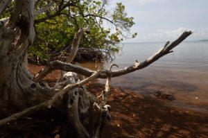 Prequ'île de la Caravelle<br> Île de la Martinique