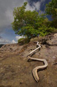 Prequ'île de la Caravelle Île de la Martinique