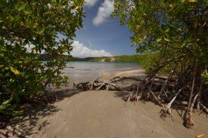 Baie du Trésor de la Prequ'île de la Caravelle<br> Île de la Martinique