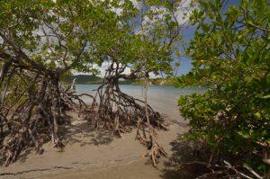 Baie du Trésor de la Prequ'île de la Caravelle Île de la Martinique
