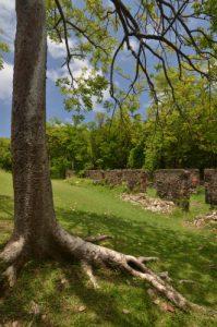 Gommier rouge (Bursera simaruba) Château Dubuc de la Prequ'île de la Caravelle Île de la Martinique