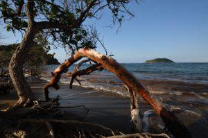 Anse Luciole<br> Île de la Martinique
