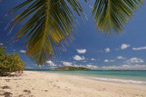Cocotier (Cocos nucifera) su la plage de Grande Terre La Trace des Caps Île de la Martinique